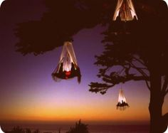 tree camping - want to do this so bad; @Jennifer Baltzegar - wanna go?