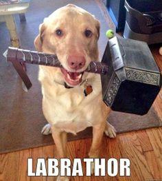 #Thor meets #Dog