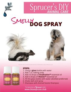 Young Living Essential Oils: Pets - Tap the pin for the most adorable pawtastic fur baby apparel! You'll love the dog clothes and cat clothes! Are Essential Oils Safe, Essential Oil Uses, Young Living Essential Oils, Young Living Pets, Smelly Dog, Oils For Life, Oils For Dogs, Yl Oils, Living Essentials