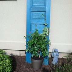 My DIY trellis from an old door.  My mandevilla loves it;)