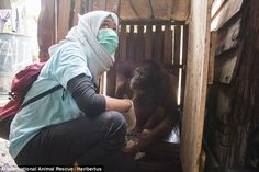 VetSulhi Aufa held Amy's hand when she found it. The animal was slumped against the wall and had a vacant expression
