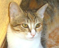 CITA - Gato en adopción - AsoKa el Grande