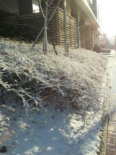Seoul Snow land