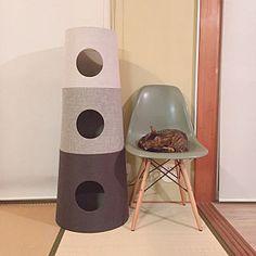 人気のお部屋写真 Stool, Furniture, Home Decor, Stools, Interior Design, Home Interior Design, Arredamento, Home Decoration, Decoration Home