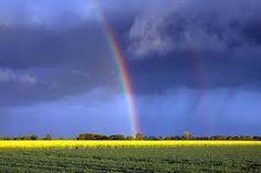 Bildergebnis für regenbogen natur