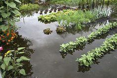 Évitez les inondations dans votre jardin   http://www.trucsdegrandmere.com/jardinage/eviter-inondations-dans-jardin.html