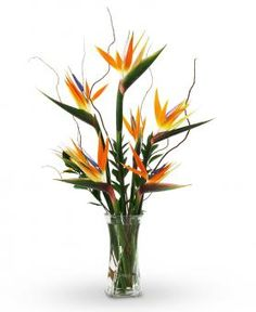 send a birds of paradise bouquet to someone with same day delivery... send tropical flowers with free delivery...