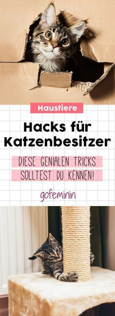Every cat owner should know these hacks! 12 cool hacks for cat owners Sabrina Stemmer Katzen Every cat owner should know these hacks! Sabrina Stemmer Every cat owner should know these hacks! 12 cool hacks for cat own Raising Kittens, Cats And Kittens, Cat Hacks, Gatos Cats, Dibujos Cute, All About Cats, Cat Supplies, Cat Toys, Cat Life