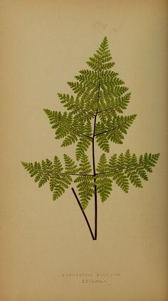 n127_w1150 by BioDivLibrary, via Flickr
