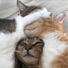 Cute Cats and kitty cats you should know - süüüßßße Tiere - Katzen Animals And Pets, Baby Animals, Funny Animals, Cute Animals, I Love Cats, Crazy Cats, Cool Cats, Pretty Cats, Beautiful Cats