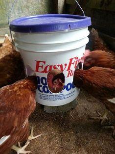 DIY 5 Gallon Plastic Bucket Chicken Feeder - easy & reduces waste.. #chickens #diy #homestead #homesteading