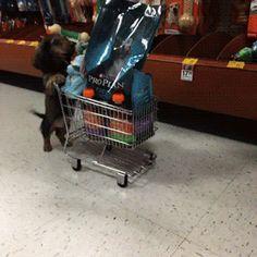 funny dog gif. more here http://artonsun.blogspot.com/2015/04/funny-dog-gif-more-here_22.html