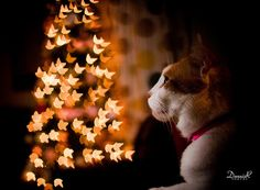 Christmas is a great time to experiment with Bokeh shots with your pets