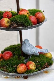 På hösten finns det hur mycket vackert som helst som man kan plocka i naturen och som man sedan kan användas till olika arrangemang. Att gö...