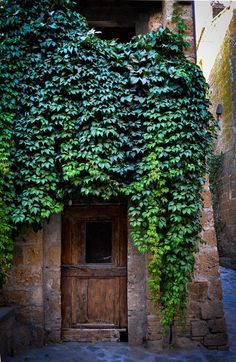 Doorway - Virginia creeper covering the facade of a centuries-old residence