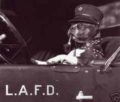 vintage fire pit bull