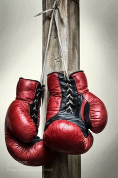Vintage boxing gloves by printoldfriends