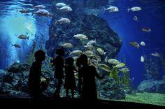 Pomysł na wakacje, czyli europejskie oceanaria grzechu warte