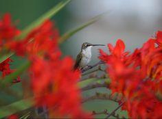 Hummingbird resting for a moment Wild Animals, Photo Contest, Hummingbird, Birds, In This Moment, Pageant Photography, Photography Challenge, Hummingbirds, Bird