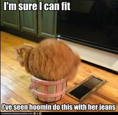 I'm sure I can fit.  I've seen hoomin do this with her jeans.