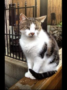 RIP little one.  7/15/14 This is Toby. He's been missing since July 4th. He's a 12yr old neutered male. He's very friendly. We've been his family since he was a kitten. It's not like him to wander. We are in waterbury ct on Nelson ave/Edson ave/Beecher ave. area. We miss him sooo much. Please call with any 2035199316 Eric&Michelle