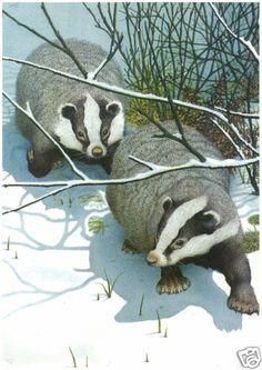 Babington MEDICI POSTCARDS Badger and Cubs