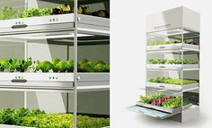 Growing Vegetables Indoors Twenty-One at a Time