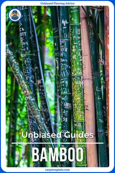 If you're undecided on bamboo, this is where you should start. Sure bamboo is for you? It still is worth glancing over the strengths and weaknesses of your new investment. This, and much more, included in my Unbiased Bamboo Flooring Guide! Nature Inspired Names, The Nut Job, Bamboo Tree, Buy Bamboo, Nature Table, Nature Nature, Nature Animals, Holiday Travel, Taking Pictures