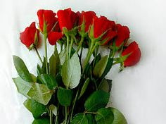 Flower Shops Delivery,  http://www.webmasterground.com/member.php?u=17807  Dependable florals on-line services. Having specialist delivery group to send out florals on-line we manage your orders with utmost efficiency.