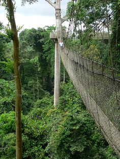 Kakum Canopy Walk, Ghana. I want to go back to ghana soooo bad..