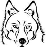 wolf, Hoofd