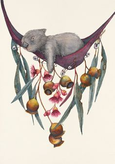 Sleepy Head Series: Wombat: Hanging out Australian Native Flowers, Australian Animals, Australian Art, Native Drawings, Animal Drawings, Art Drawings, Drawing Animals, Cute Wombat, Poster Art