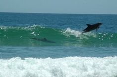 ILUKA NSW Whale, Australia, Outdoor, Animals, Outdoors, Whales, Animaux, Animal, Animales