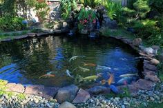 Koi Pond -  have wanted one of these since I was little
