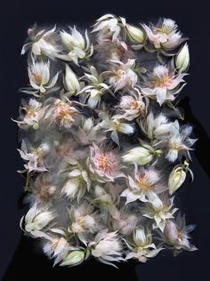 Bruce Boyd and Tharien Smith collaborate to create beautiful photos of flowers bounded in ice.Look at wonderful ways the most gentle of nature is preserved!