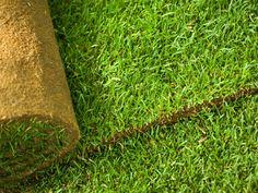 Cool Rollrasen kleidet Ihren Garten schnell in ein gr nes Gewand Garten und Landschaftsbau Eric Classen Vom Gartentraum zu Ihrem Traumgarten u