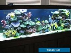 How to convert a Saltwater Fish Aquarium with live rock into an Artificial Coral Reef Tank? No reef aquarium equipment or intense lighting needed Coral Reef Aquarium, Saltwater Aquarium Fish, Saltwater Tank, Marine Aquarium, Freshwater Aquarium, Sea Aquarium, Marine Fish Tanks, Marine Tank, Aquarium Design