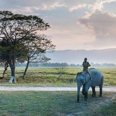 A mahout taking his elephant back to camp for the night after a day of hosting…