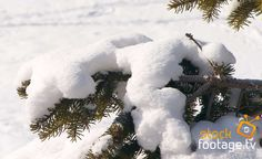 Do you love the #snow? Watch our #stockfootage  @ http://www.stock-footage.tv/search.php?clearSearch=true&searchPhrase=snow #snow #winterwonderland #winter #filmmaterial