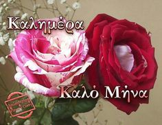 Mina, Seasons, Rose, Amazing, Flowers, Plants, Cards, Beautiful, Paracord
