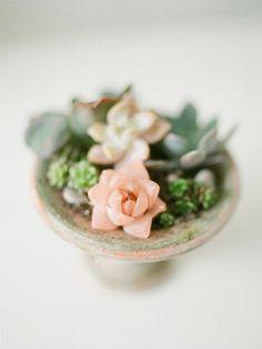 A pink succulent