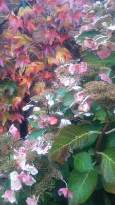 Autumnal layers IV. Photo credit: Paola De Giovanni