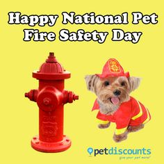 Today is National Pet Fire Safety Day! Have YOU taken the right precautions? Check out our NEW BLOG POST on what you can do to ensure your pet's safety on petdiscounts.com!