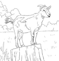 Realistic Domestic Goat Coloring Page Free Printable Coloring Pages Goat Art Animal Stencil Coloring Pages