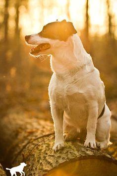 Gordi (Jack Russell Terrier, Unbekannt) Mischling Mix Jack Russell Terrier, Mixed Breed, Corgi, Best Friends, Cats, Animals, Bestfriends, Gatos, Animales