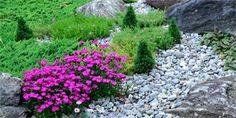 Kvetoucí skalka po celý rok: Čím ji osázet, aby kvetla a nedala moc práce