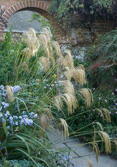 Our Plants | Great Dixter
