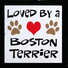 Repin if you are Loved by a Boston Terrier ! Like Boston Terrier Dogs Facebook page : http://www.facebook.com/bterrierdogs