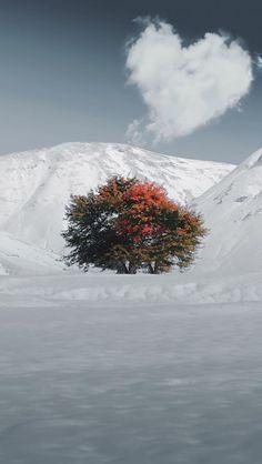 Murat DAĞASLAN #photography #photo #mountains #landscape #snow #tree #color