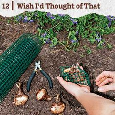 How to prevent squirrels from eating your flowering bulbs, from TOH fan Bob Savery of Knoxville, TN: Wrap them in ½-inch hardware cloth as you plant them. The bulbs grow through the mesh, but rodents can't get to them! | thisoldhouse.com  Photo: Erik Rank | thisoldhouse.com | from 28 Reader Tips That Save Time and Money